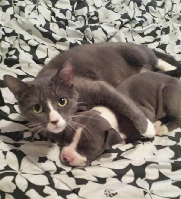 brother-from-another-mother-similar-animals-26-5788e4bc02b61__605