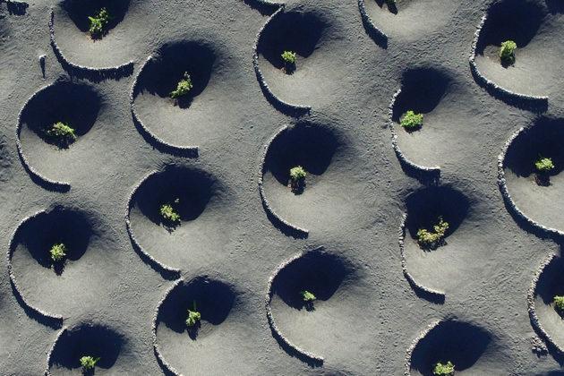 Árvores na Ilha de Lanzarote. Foto por: Mountaindrone
