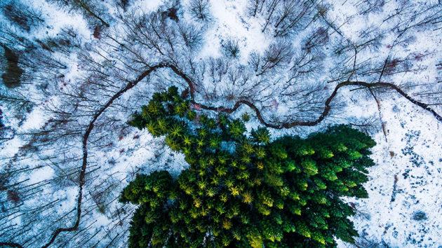 Floresta de Kalbyris - Dinamarca. Foto por: Mbernholdt