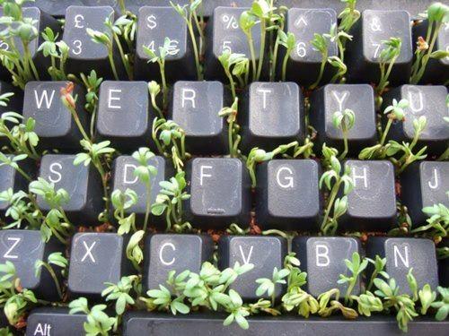 #12 - Já pensou em plantar dentro do seu teclado velho?
