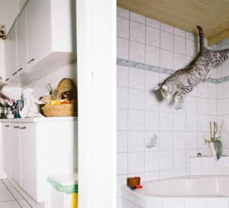 gatos-pulando