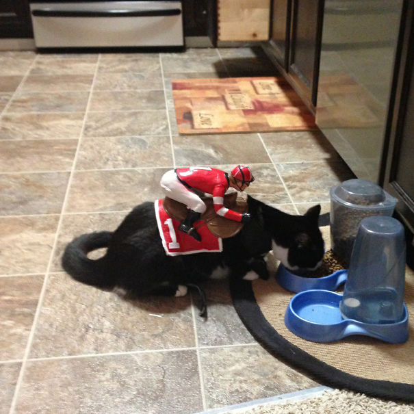 halloween-cat-costumes-20-57f75fe317c97__605