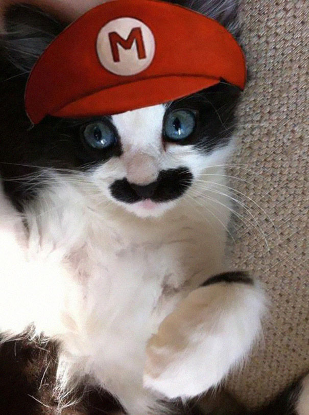 halloween-cat-costumes-22-57f75fe81c8ba__605