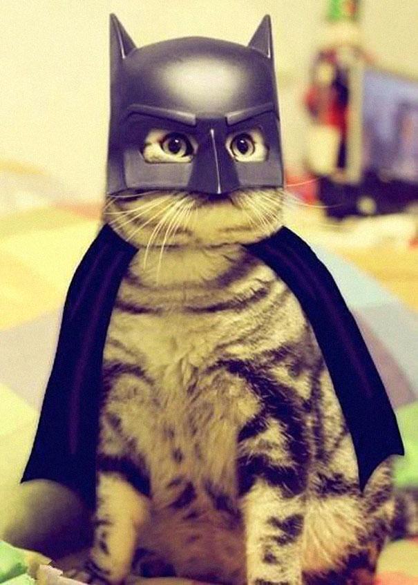 halloween-cat-costumes-23-57f75fec3cd52__605