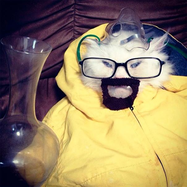 halloween-cat-costumes-25-57f75ff29b4e3__605
