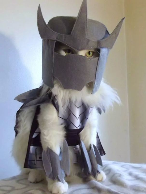 halloween-cat-costumes-34-57f760044fed1-jpeg__605