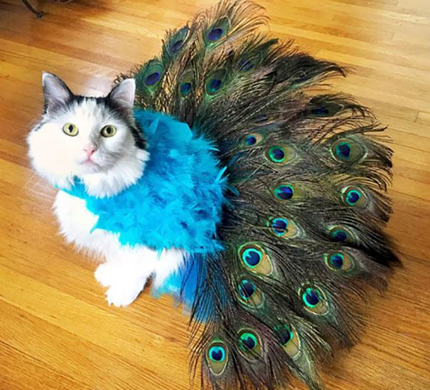 halloween-cat-costumes-41-57f76979a36e9__605