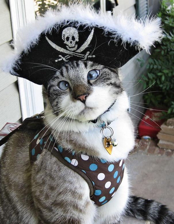 halloween-cat-costumes-45-57f76c4e84b5f__605