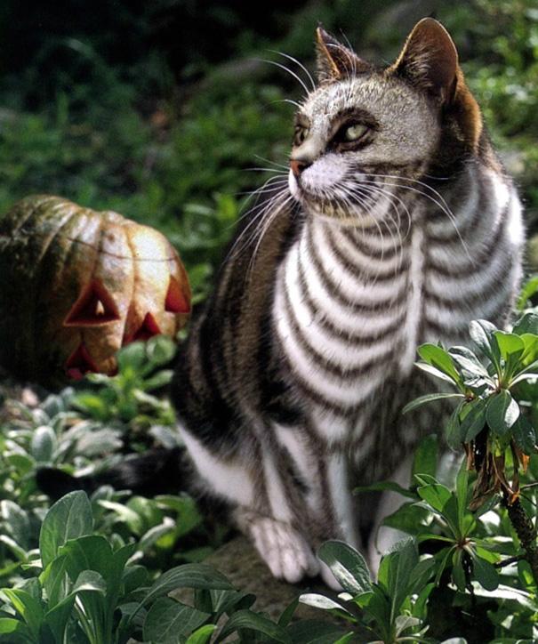 halloween-cat-costumes-52-57f785afe5c64__605