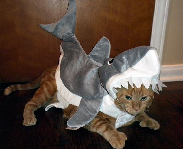 halloween-cat-costumes-53-57f7866ad776e__605
