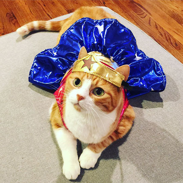 halloween-cat-costumes-56-57f783cc77400__605