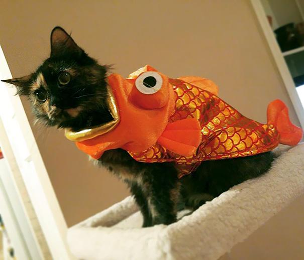 halloween-cat-costumes-61-57f7880d71f27__605