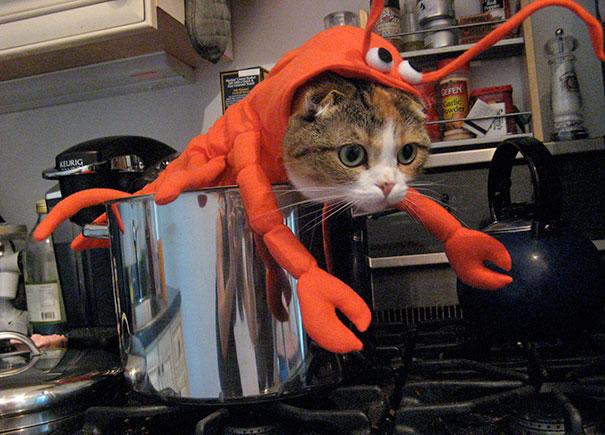 halloween-cat-costumes-9-57f75fca0ac2c__605