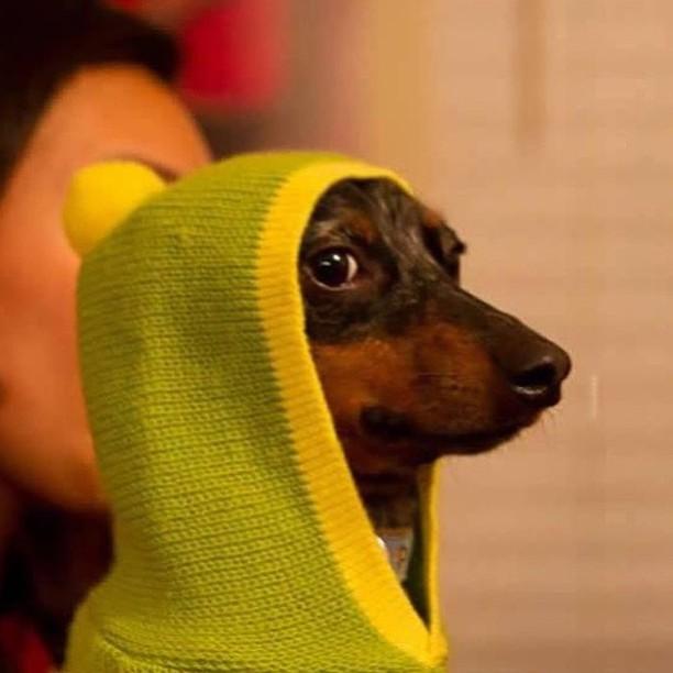 #4 - O Verdadeiro Snoop Dog