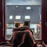 felicity-berkleef-gatos-na-janela-2