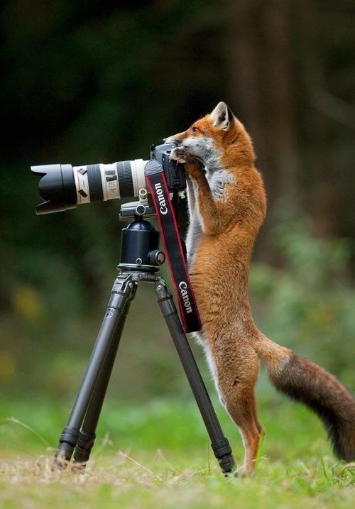 #12 - Vida de fotógrafo.