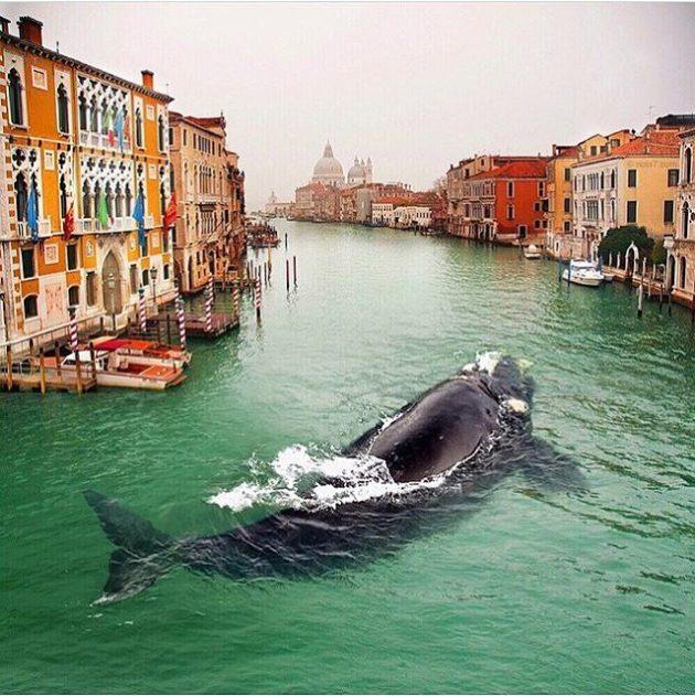 #7 - Passeio por Veneza.