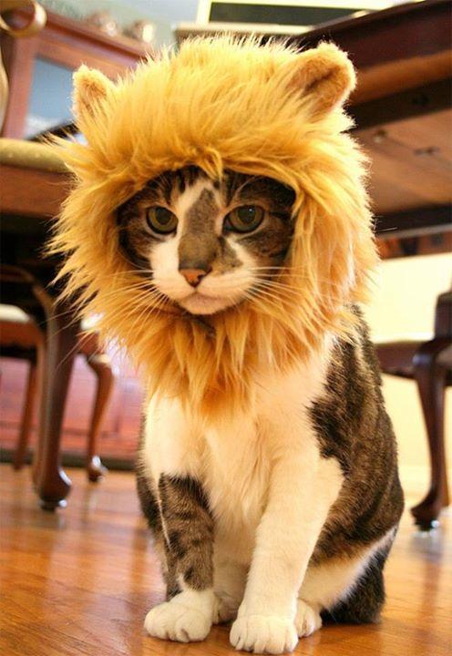 #14 - Rei Gatão.