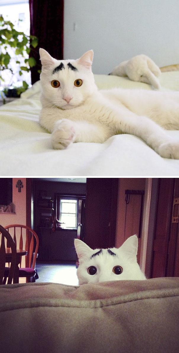 25 gatos com pelagem extraordinárias que você vai querer um deles ... 460c3da40591