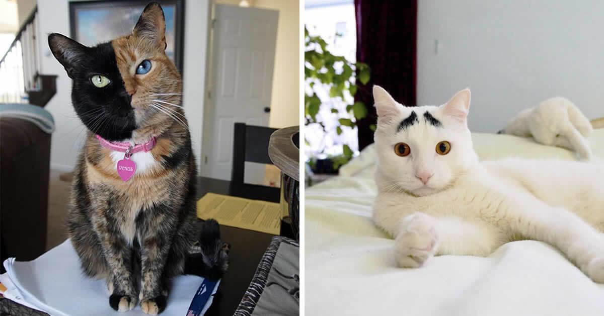 25 gatos com pelagem extraordinárias que você vai querer um deles agora  mesmo f0c51277ca09
