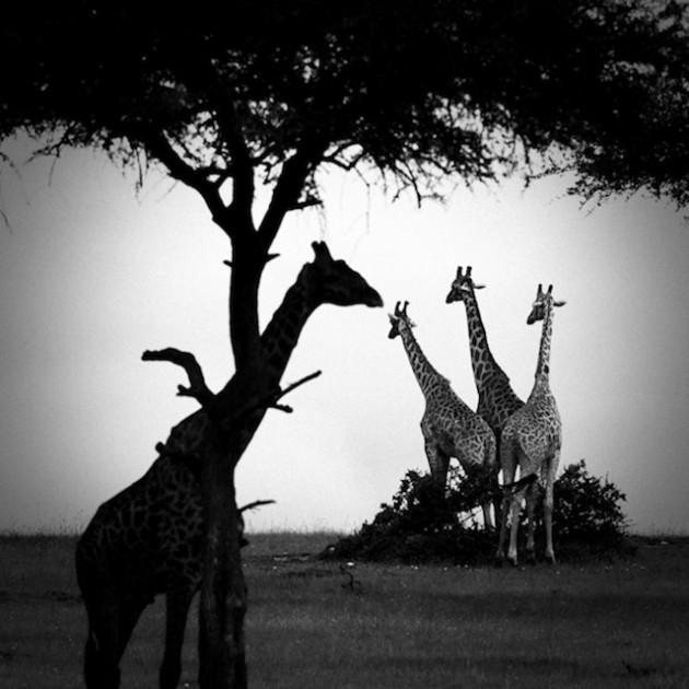 africa-laurentbaheux-13
