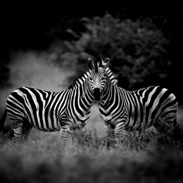africa-laurentbaheux-46