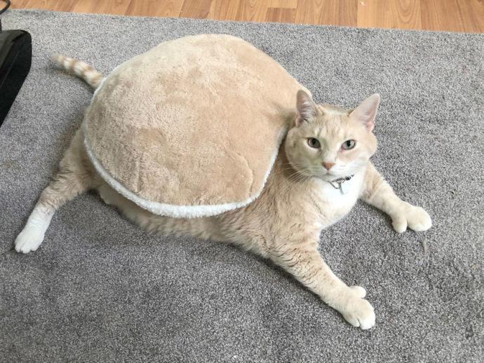 Como perder peso gato