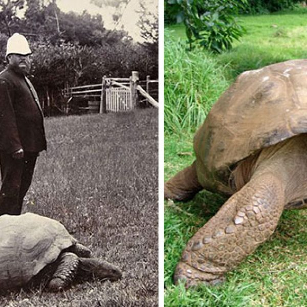 1902 e Hoje da tartaruga Jonathan