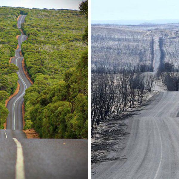 Austrália pós incencio 07