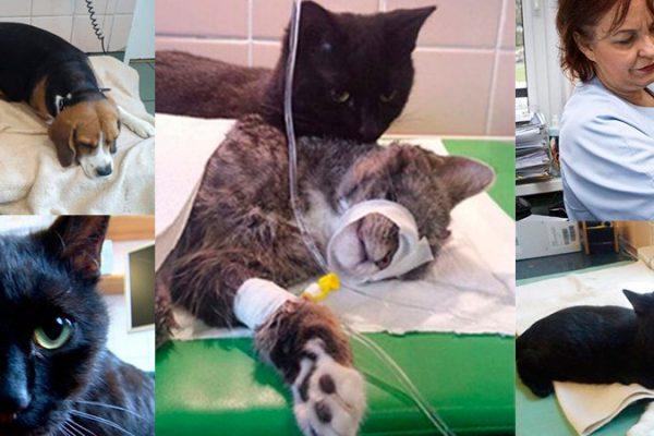 Conheça Rademenes, o gato que depois de resgatado cuida de animais doentes e feridos!