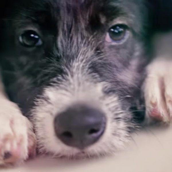 Para incentivar adoção, projeto troca animais à venda em pet shops por animais para adoção