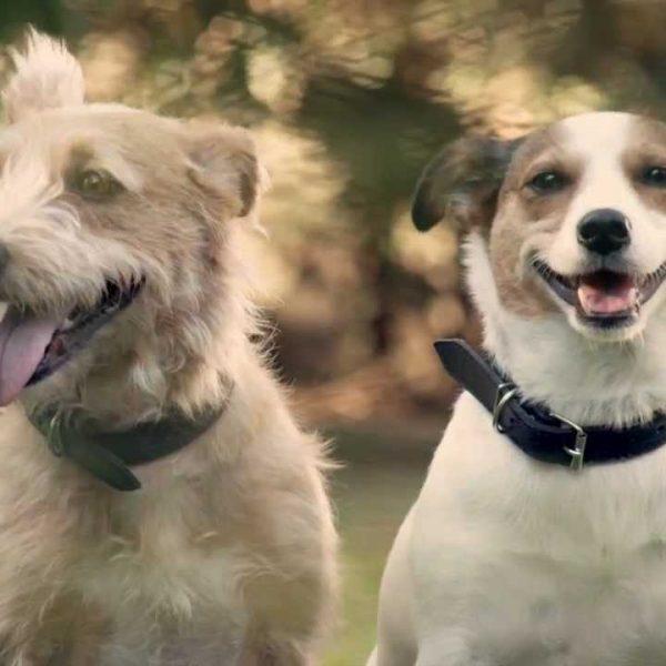 Vídeo mostra o que acontece com os cães quando os donos tornam-se pais. É Emocionante!