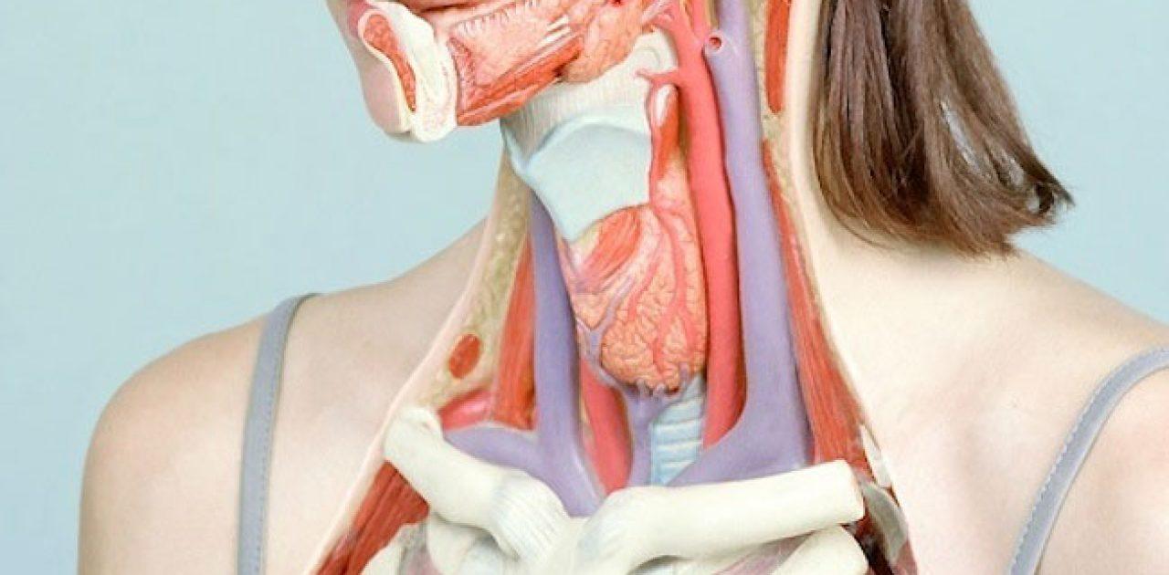 a-anatomia-do-corpo-humano-foto-4