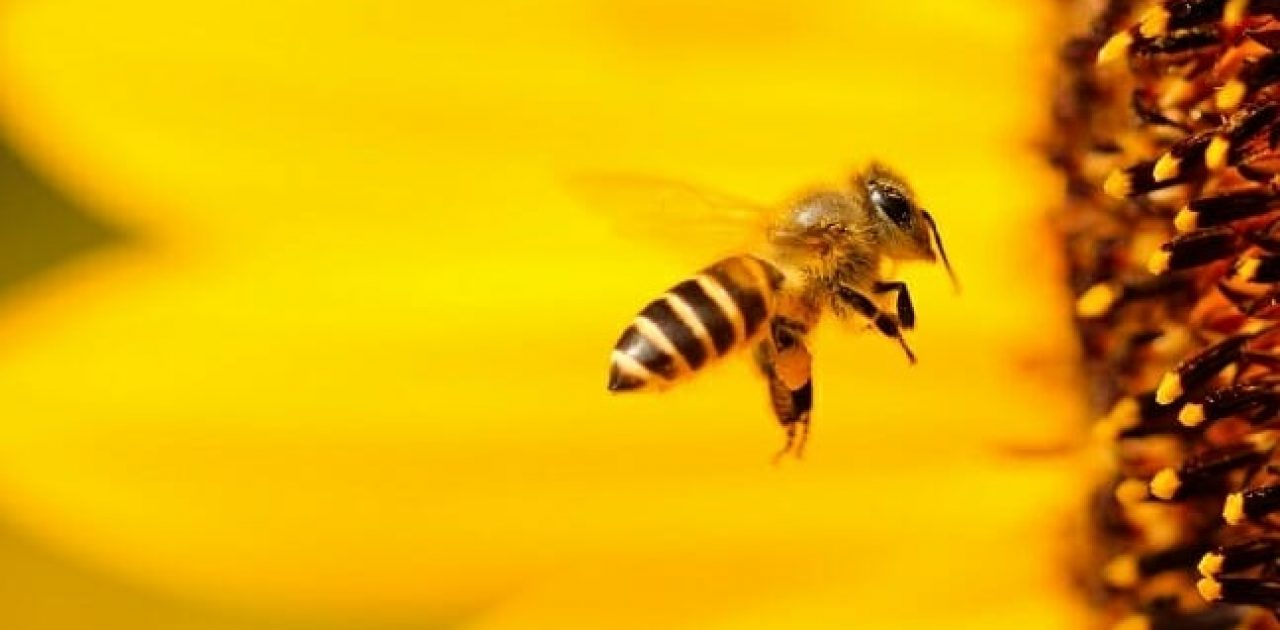 abelhas importantes capa