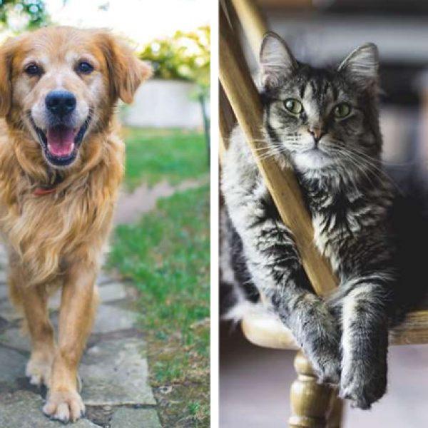 adoção de animais capa