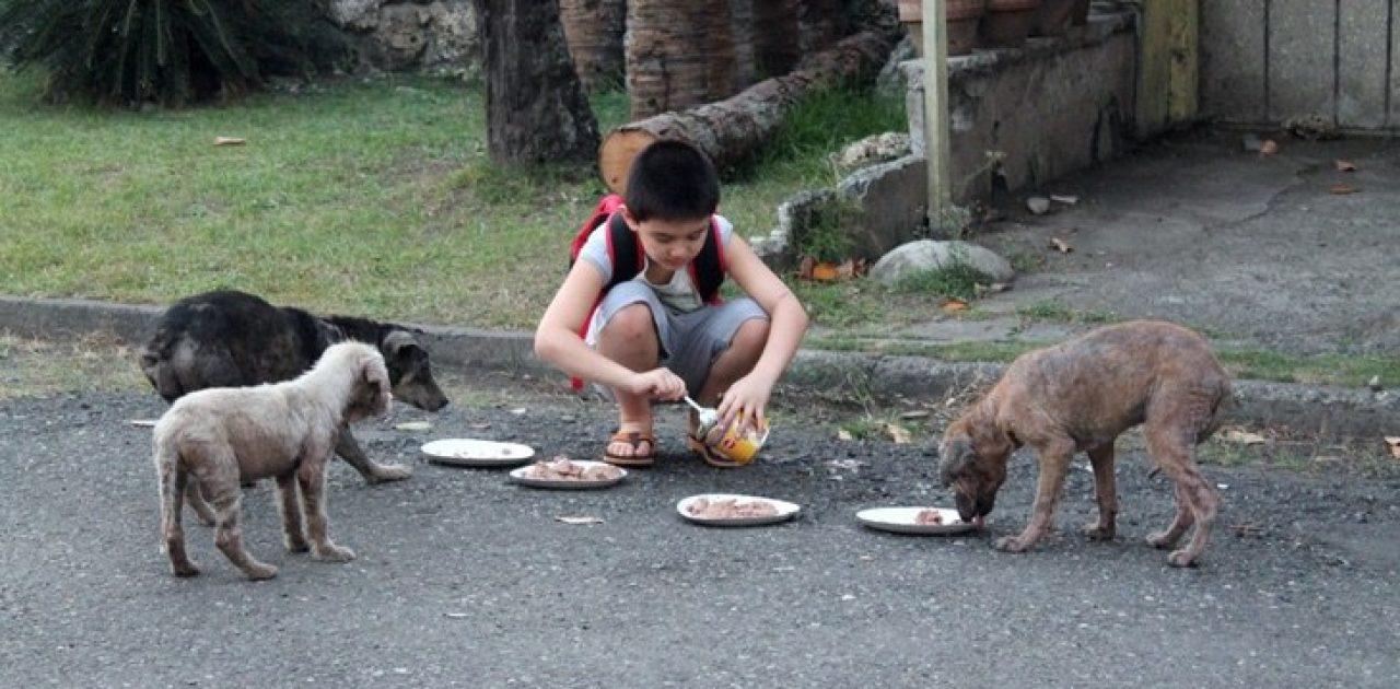 alimentando cães 01