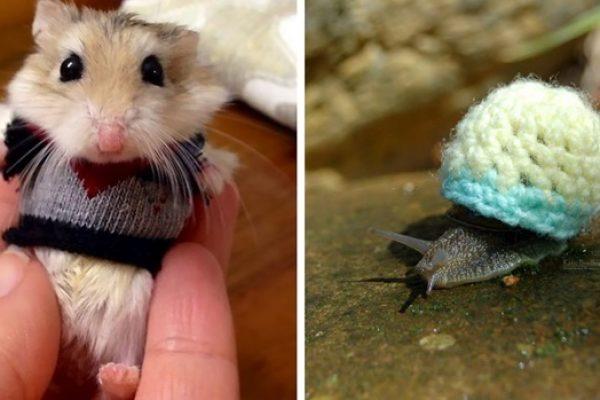 animais com suéter