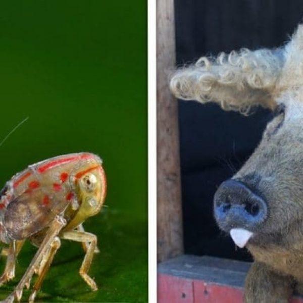 animais diferentes capa