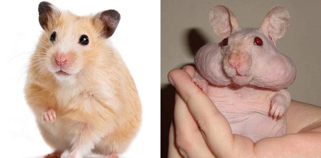 animais sem pelos capa