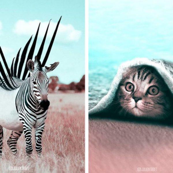 animais surrealistas capa