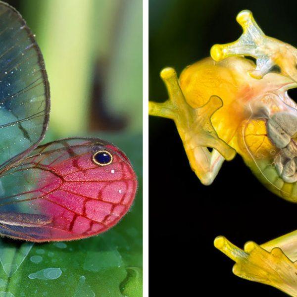 animais transparentes