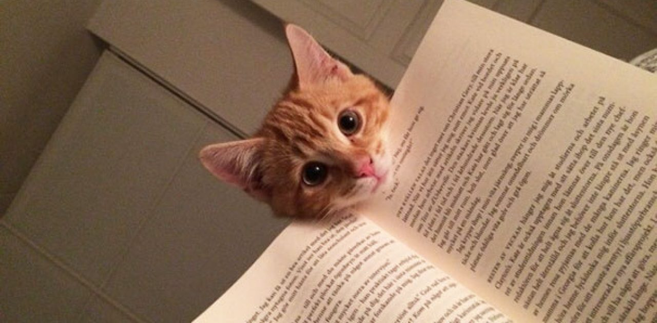 animals-dont-let-you-read-1__605