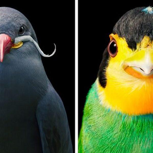aves raras capa