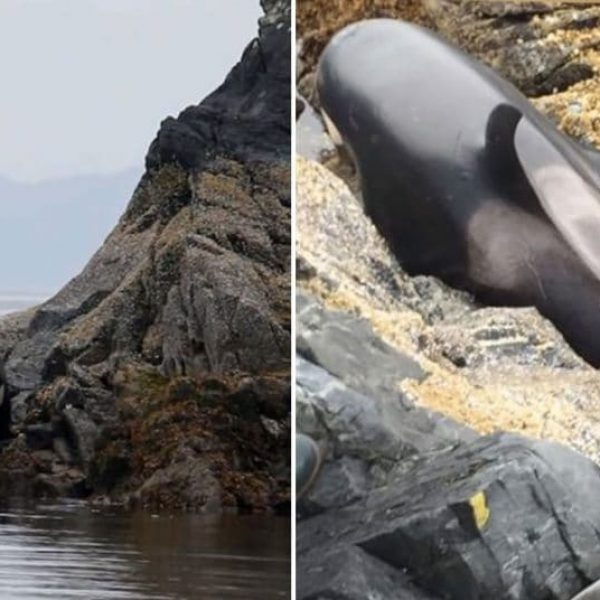 baleia encalhada capa