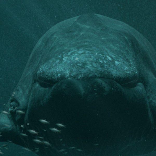 baleia.jpg.pagespeed.ce.0qtmr1W3Pt