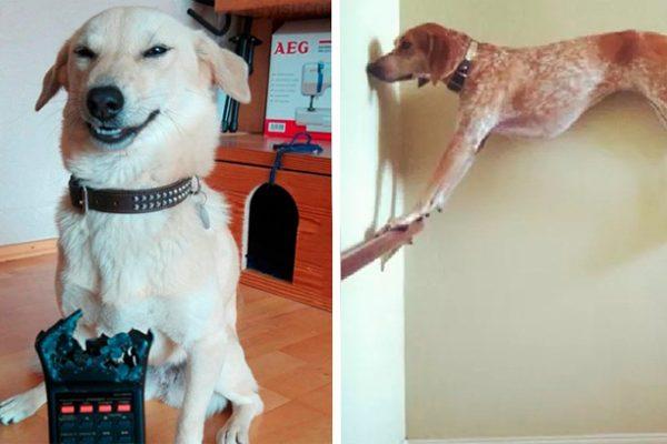 cães arteiros capa