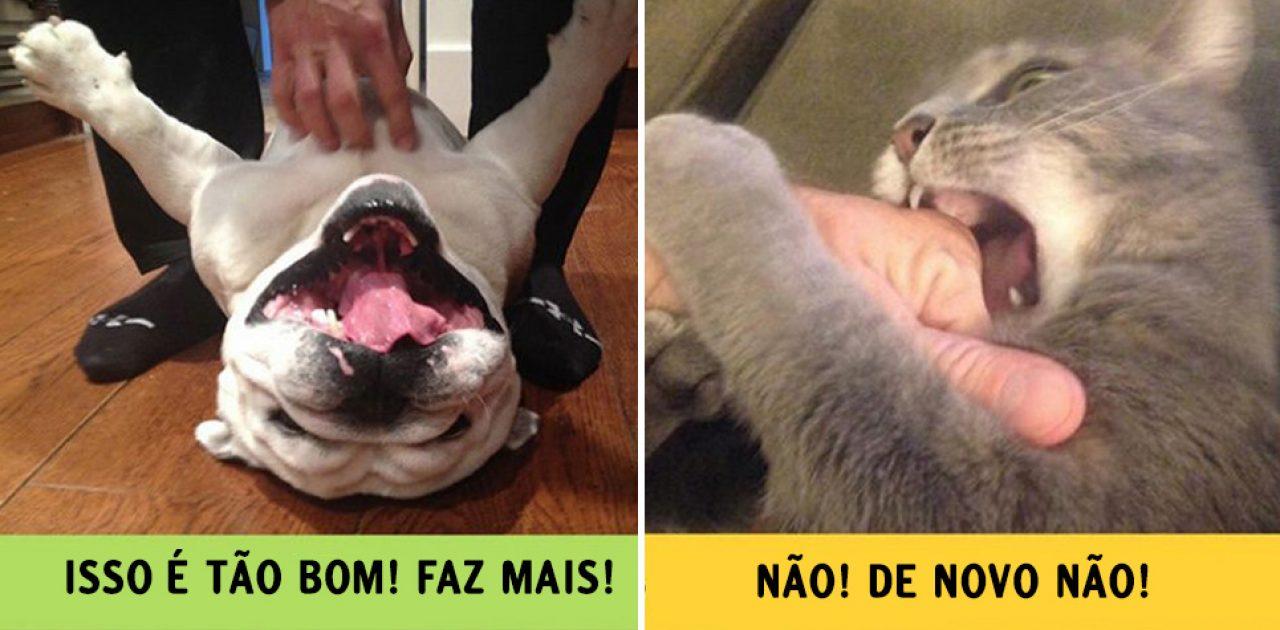 cães e gatos capa