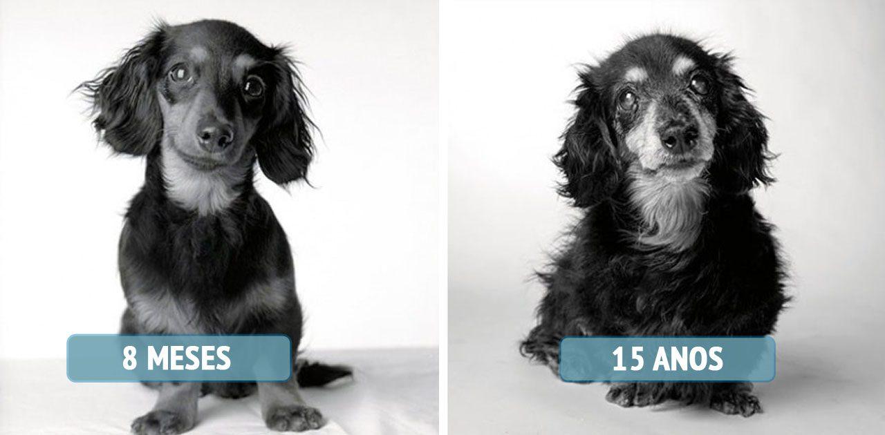 cães envelhecidos capa