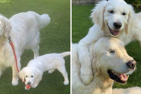 cão cego capa