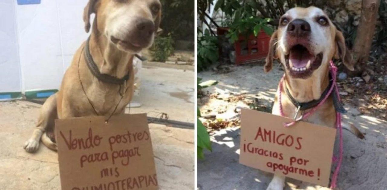 cão com câncer capa